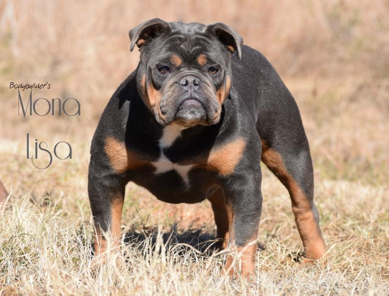Bodybuilder Bulldogs' Mona Lisa