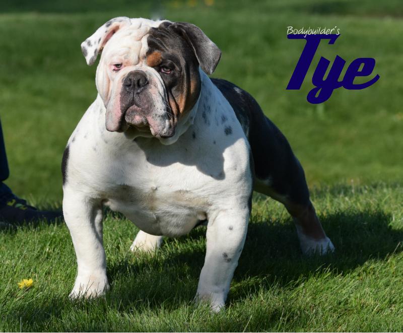 Bodybuilder Bulldogs' Tye