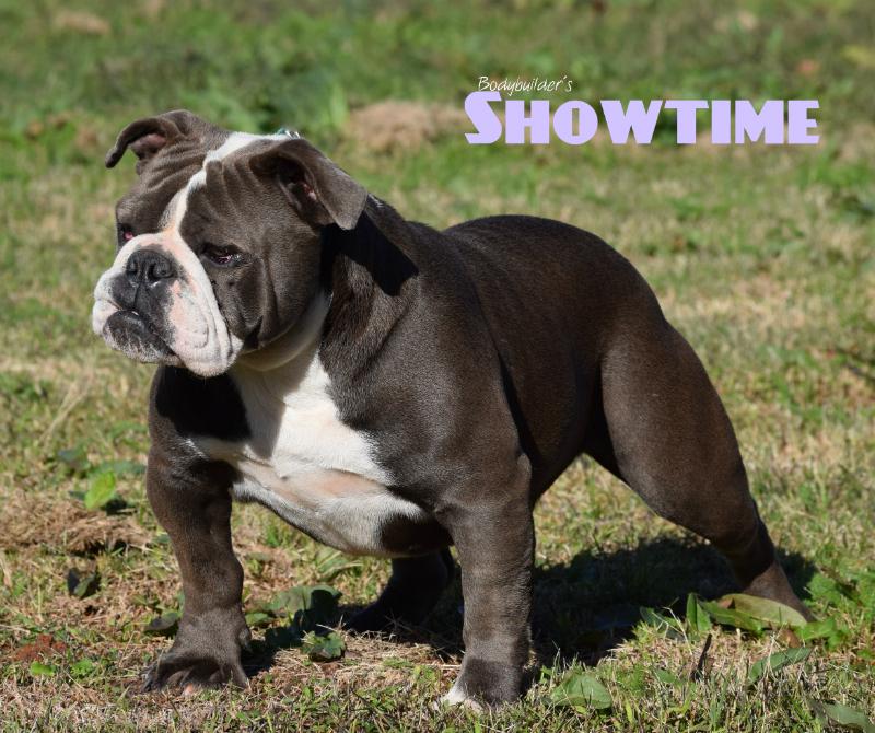 Bodybuilder Bulldogs' Showtime